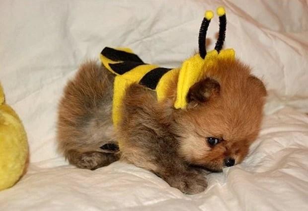 Bee_Costumes_7