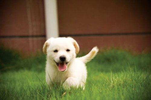Dog-in-Yard