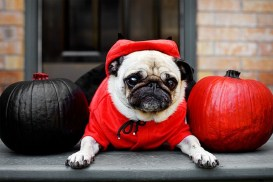 Little red riding dog