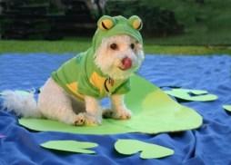 Frog Dog