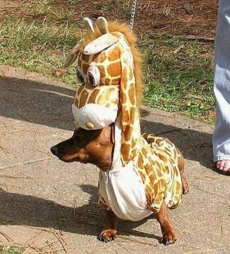 Dog in a giraffe costume