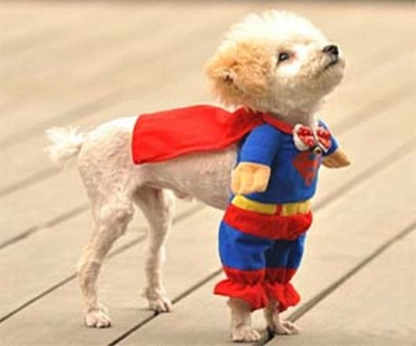 Another Superman dog