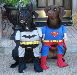 More superhero dogs