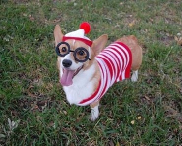 A Gallery of Dogs in Adorable Costumes