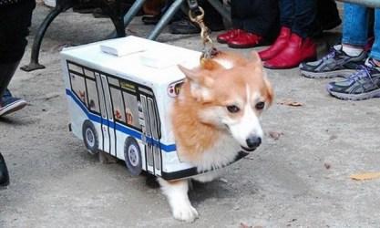 Bus dog?