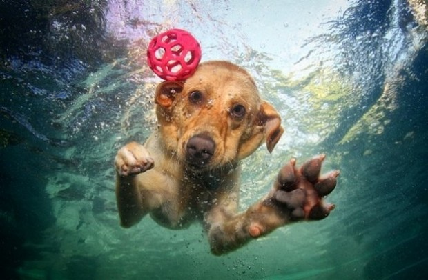 Dogs_In_Water_10