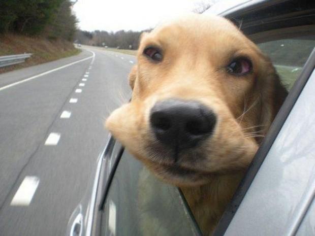 Dogs_In_Wind_1