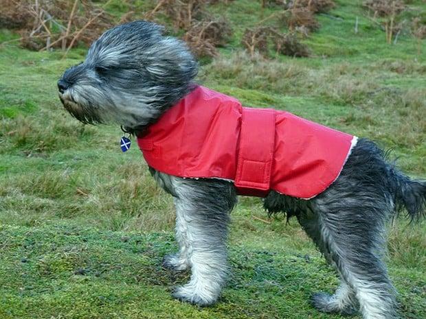 Dogs_In_Wind_2