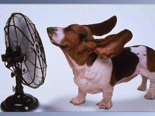 Dogs_In_Wind_5
