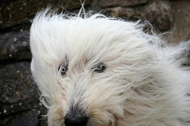Dogs_In_Wind_6