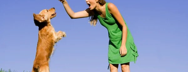 Ten Great Behavioral Dog Training Tips