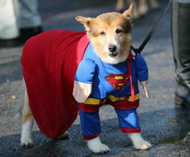 Superdog_5