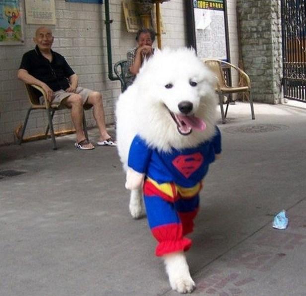 Superdog_6