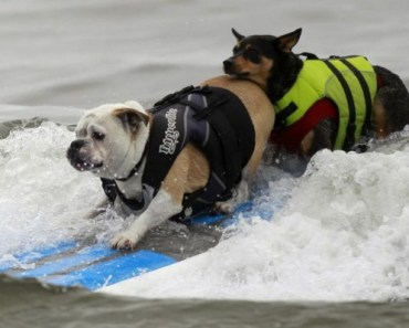 Want to Surf with Your Dog? Here Are Some Tips