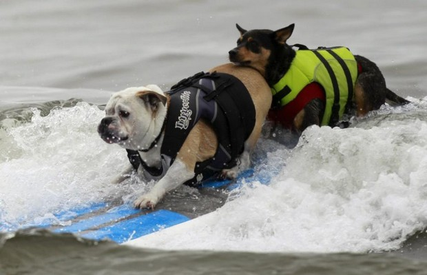 Surfing_Dogs_11