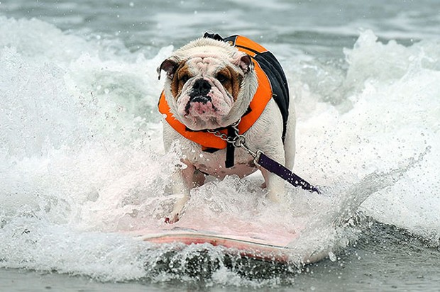 Surfing_Dogs_2