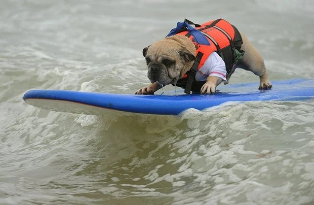 Surfing_Dogs_4
