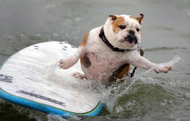 Surfing_Dogs_5