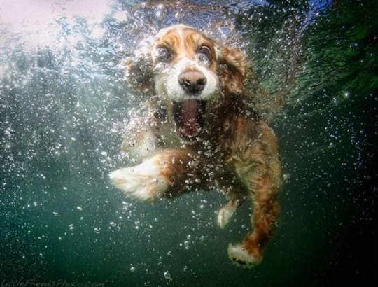 Underwater_Dog_5