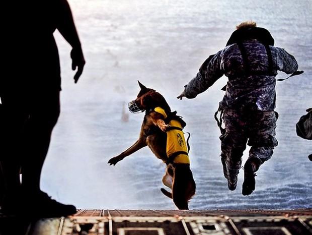 combat_dogs_1