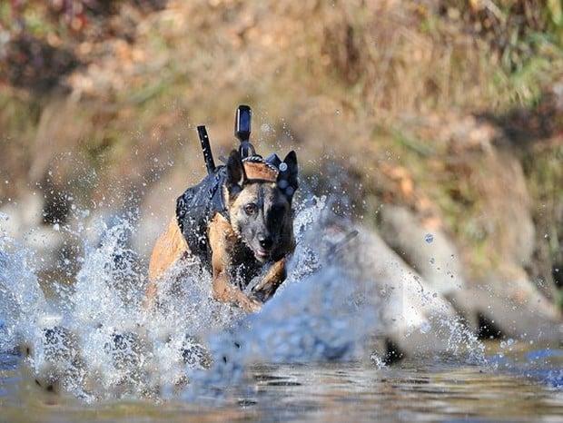 combat_dogs_10