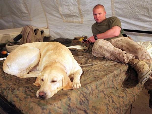 combat_dogs_9