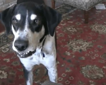 Dog Video of the Day:  The Viral Dog Wants a Kitty Video