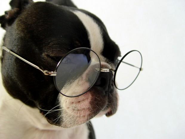 smart_dog_11