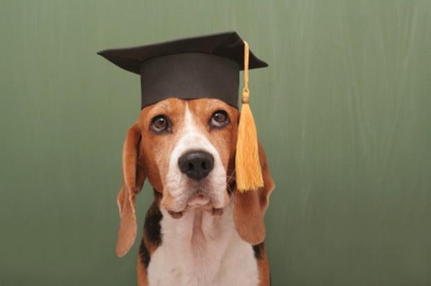smart_dog_7