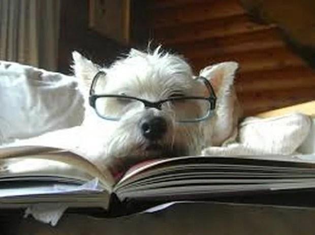smart_dog_8