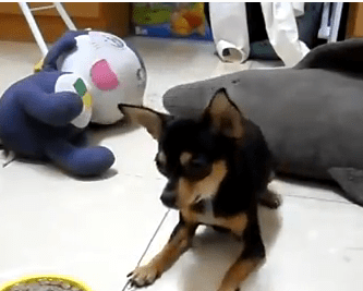 Dog Video of the Day:  One of the Best Dog Training Videos of the Year