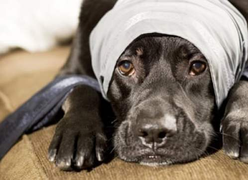 1342282352_dog_insurance