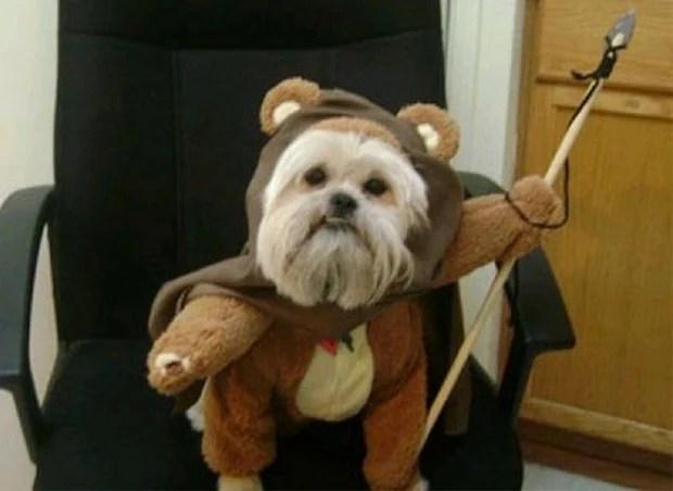Dog_Cosplay_3