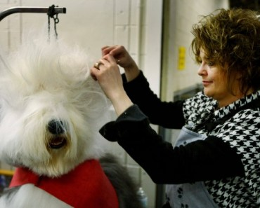 Fun Pictures of Dogs at the Groomers