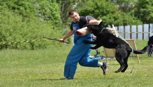 How-to-Train-a-Dog-to-Attack-on-Command