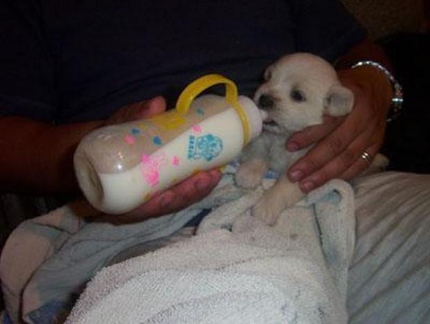 Puppy_Drinking_6