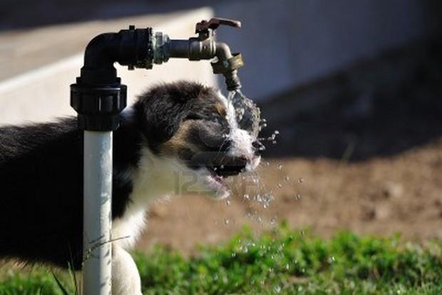 Puppy_Drinking_8