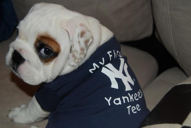 baseball_dogs_3