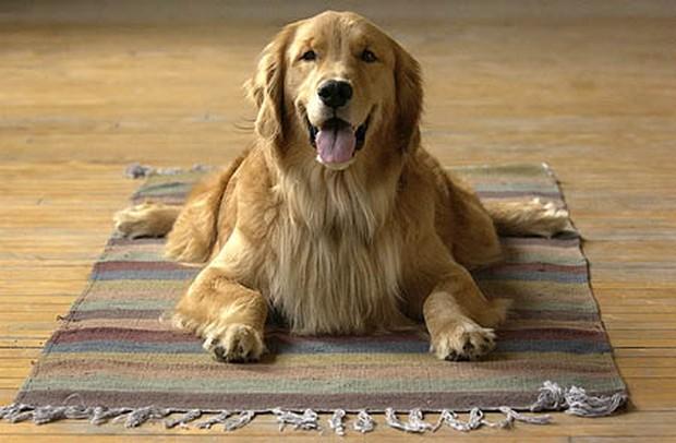 dog_yoga_2