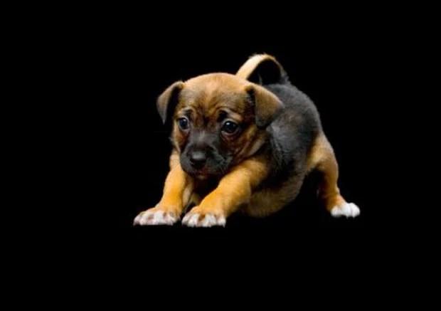 dog_yoga_5