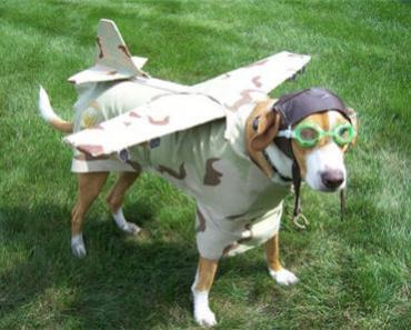 The Top 10 Pet Friendly Airlines