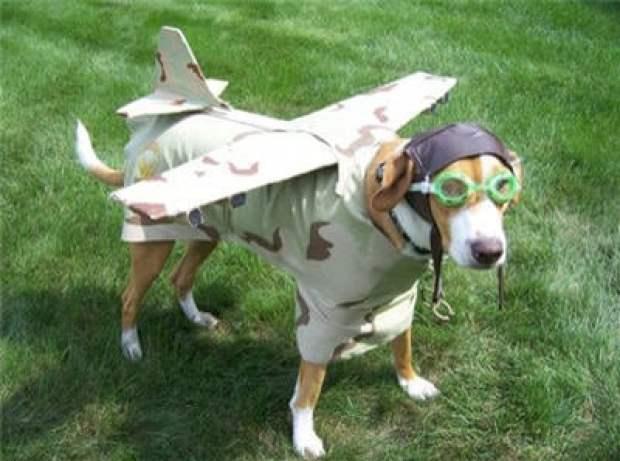 dogfly