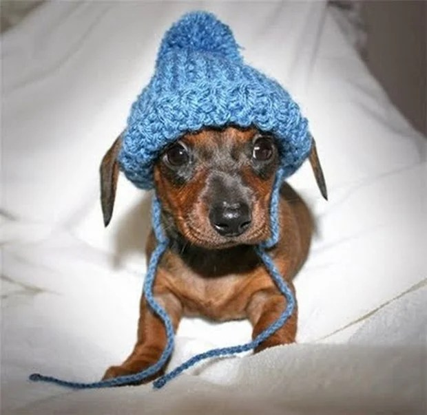 dogs_in_hats_2