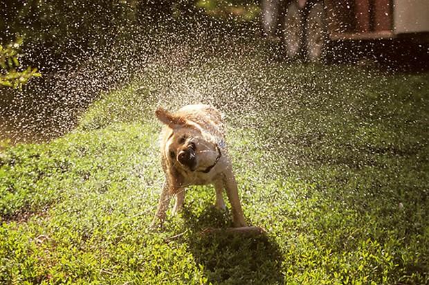 water_shake_dogs_4
