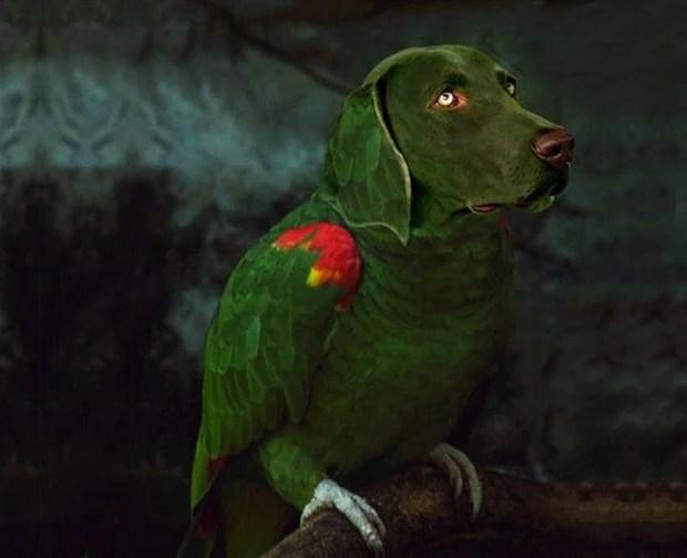 Dog_Photoshop_12