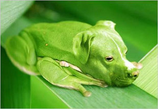 Dog_Photoshop_2