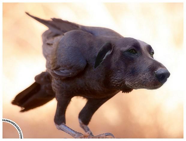 Dog_Photoshop_8