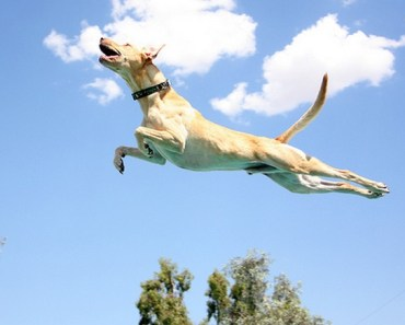 """A Funny Gallery of """"Flying"""" Dogs"""