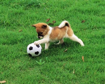 A Gallery of Dogs Who Love To Play Soccer