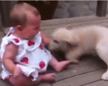 Dog Video of the Day: Baby and Dog are Best Friends